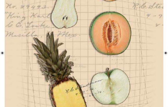 Sacmi presentará en Destaca 2016 su Nariz Electrónica y los Sistemas NIR para el análisis industrial de la fruta